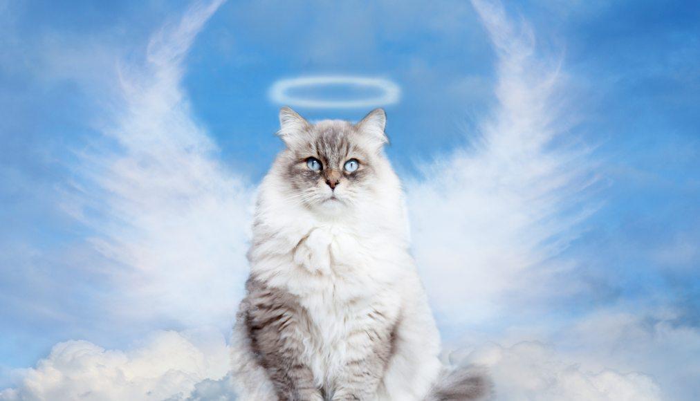 Chien, chat, etc… retrouverons-nous nos animaux de compagnie au Paradis ? IStock-869451682